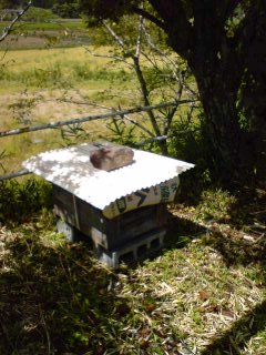 養蜂家誕生?