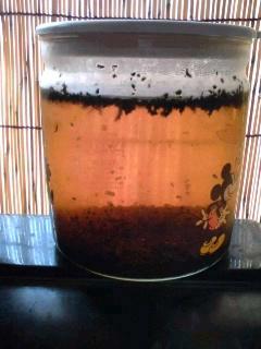 水出し紅茶
