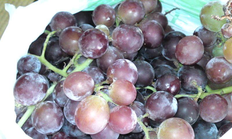 美味しいブドウ
